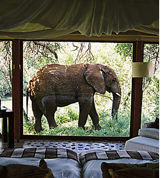 Honeymoon Elephant