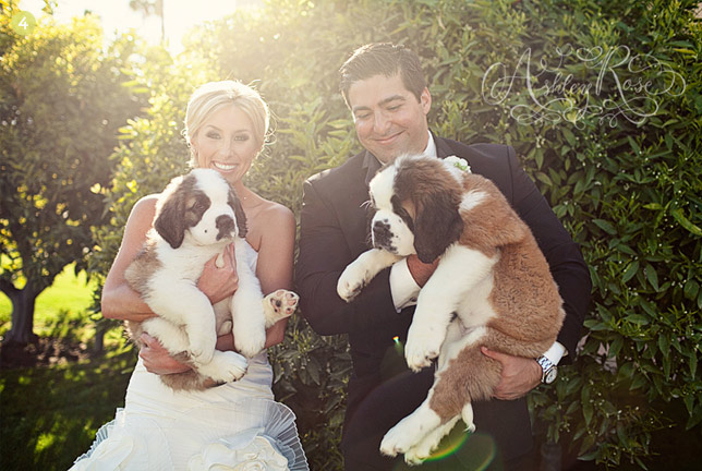Dogs In Weddings: A Practical Guide